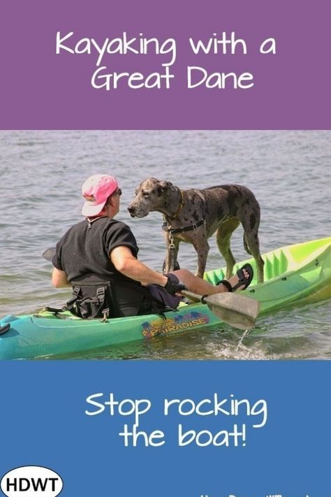 Boating with a Great Dane maybe great comic relief for those around you. There are also some things to know before taking a giant dog on a small boat. #greatdanekayaking #boatingwithdogs #adventuredogs #puppy #Retriever #Labrador