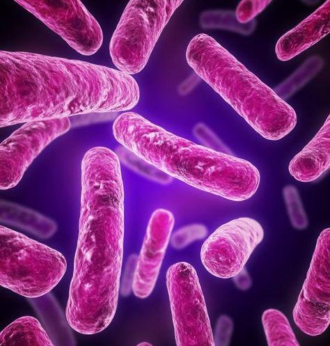síntomas de parásito ingerido