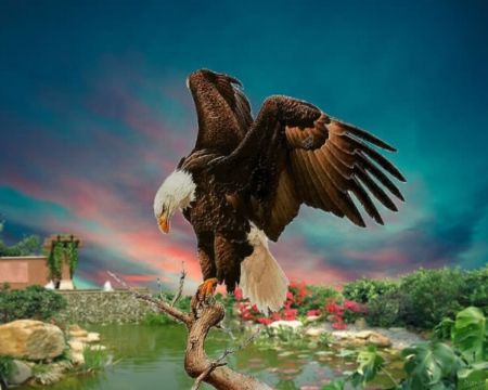 Proud Eagle 3d And Cg Abstract Background Wallpapers On Desktop Nexus Image 2468230 Abstract Background Wallpapers Eagle Pictures Sunset Wallpaper Cool eagle wallpaper 3d
