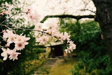 Le Jardin Japonais D Hasselt 472 315