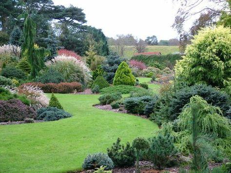 Immergrüne Gartenpflanzen, Sträucher und Hecke für frische