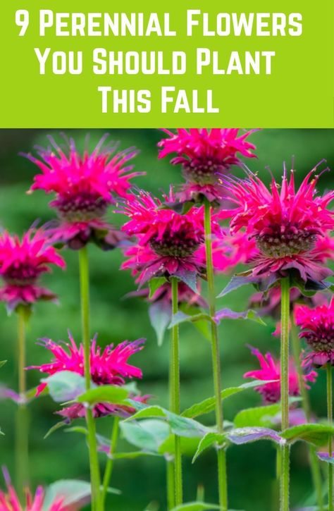 Fall Perennials, Perennials Fabric, Full Sun Perennials, Flowers Perennials, Garden Yard Ideas, Easy Garden, Autumn Garden, Lawn And Garden, Backyard Ideas