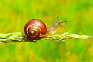 Infograph Meditation Guide For Beginners To Lead A Calmer More Mindful Life Snail Image Snail Photo