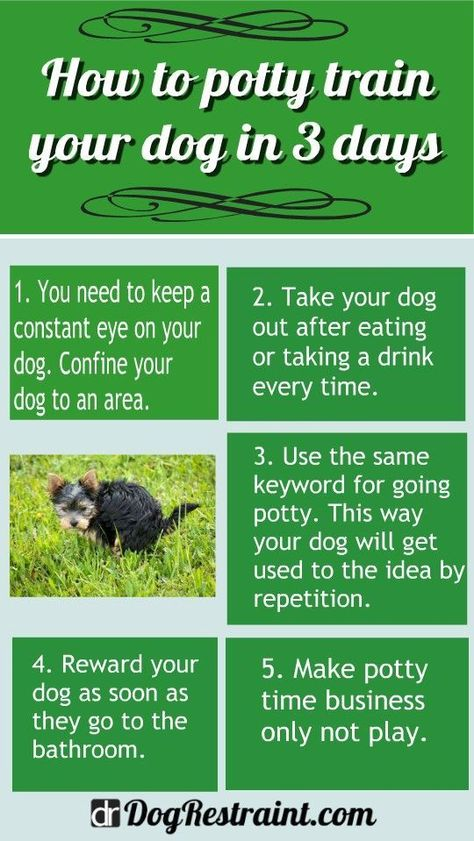 How To Potty Train a Dog in 3 Days