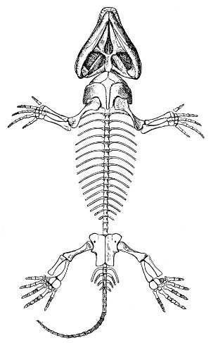 Esqueleto De Los Reptiles Características Generales Esqueleto Esqueleto Dibujo Esqueleto Serpiente