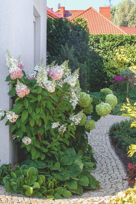 Zdjecie Numer 10 W Galerii Hortensja Bukietowa Hydrangea Paniculata Uprawa Ciecie Pielegnacja Hortensji W Ogrodzie Hydrangea Paniculata Plants Garden