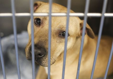 Lucas County dog shelter full as busiest time looms