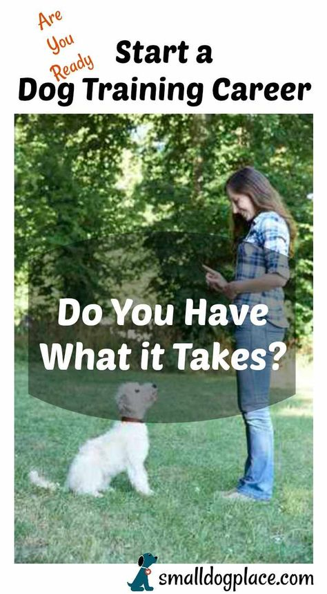 Your Dog Training Career An Introduction Dog Training Your Dog