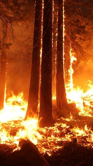 Forest Service Maps Aid Fire Recovery In 2020 Fire Painting