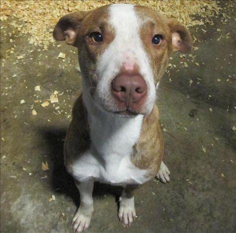 Ajax Spca Of Texas Dallas Dog Adoption Spca Adoption