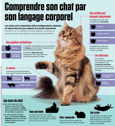 En connaissant certains signaux corporels, le comportement des chats se décode assez facilement.