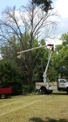 Removing A Dead Tree In Greenwood