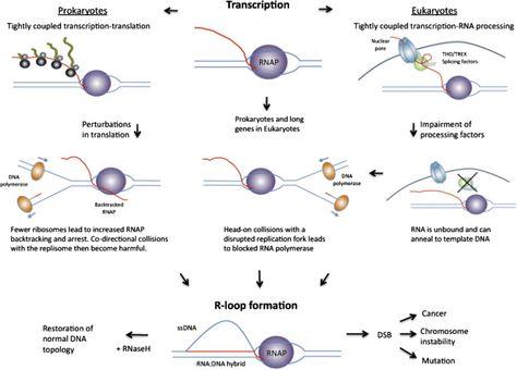 27 Microbiology Ideas Microbiology Prokaryotes Prokaryotic Cell