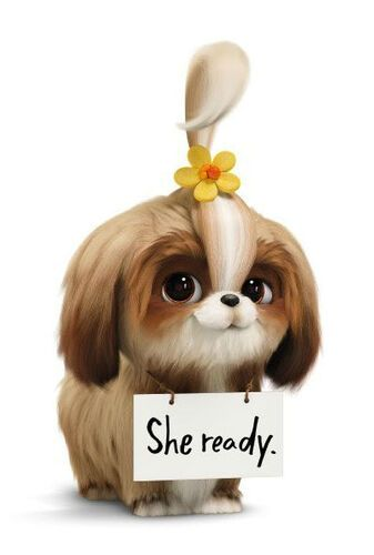 Daisy The Secret Life Of Pets In 2020 Secret Life Of Pets