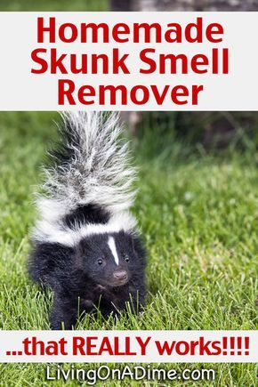 Homemade Skunk Smell Remover   that REALLY works!!!!   skunk   Skunk