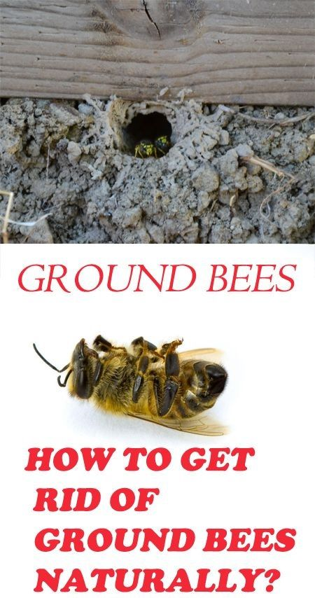 922038f33045615507264f55122a05b9 - How To Get Rid Of Bees Flying Around You