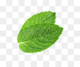 Free Download Peppermint Mentha Spicata Water Mint Leaf Pepermint Png Png 674 533 And 253 91 Kb Leaf Photography Mint Leaves Green Grass Background