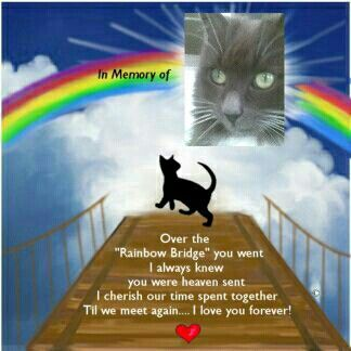 We Miss You Jack Our Special Angel Loved Beyond Words Xxxxx Pet
