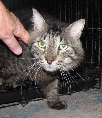 Pin On Cats And Kittens In Need