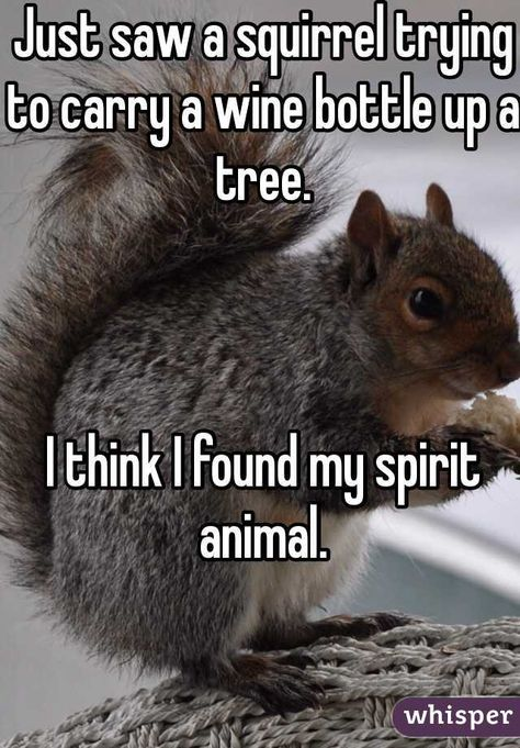 """""""Just saw a squirrel trying to carry a wine bottle up a tree.I think I found my spirit animal. """""""