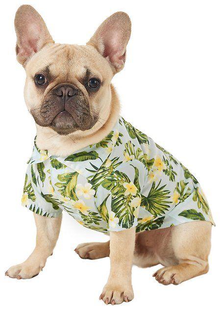 Buy Frisco Hawaiian Camp Dog Shirt Medium At Chewy Com Free