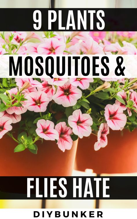 These mosquito repelling plants are great for landscaping your front and backyard. Garden Yard Ideas, Lawn And Garden, Garden Projects, Garden Bugs, Garden Layouts, Garden Water, Garden Decorations, Outdoor Plants, Outdoor Gardens
