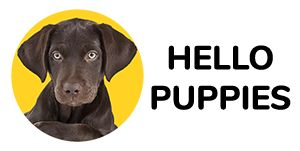 Payments Puppies Puppy Store Pet Store Puppies