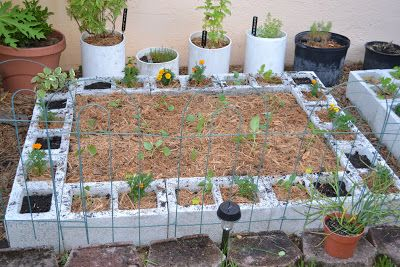 DragonFly Garden: Cinderblock raised vegetable garden