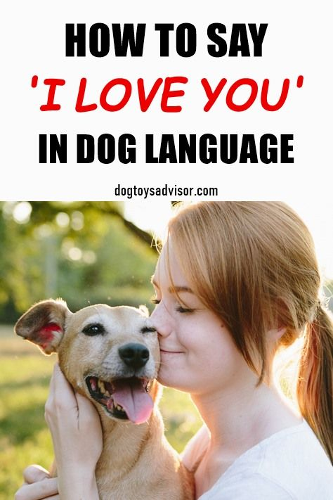 11 Ways To Show Your Dog You Love Them Dogs Dog Language Your Dog