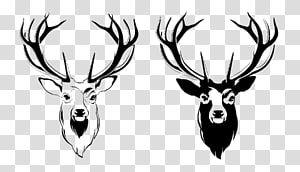 Two Deer Mounts Illustration Red Deer Antler Moose Deer Head Transparent Background Png Clipart Deer Illustration Moose Illustration Antler Illustration