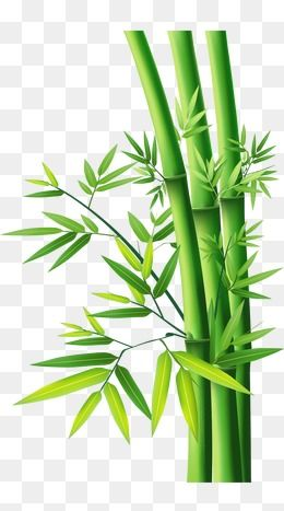 bamboo bamboo bamboo bamboo leaves bamboo vector png transparent clipart image and psd file for free download bamboo art bamboo art painting bamboo drawing bamboo bamboo bamboo bamboo leaves