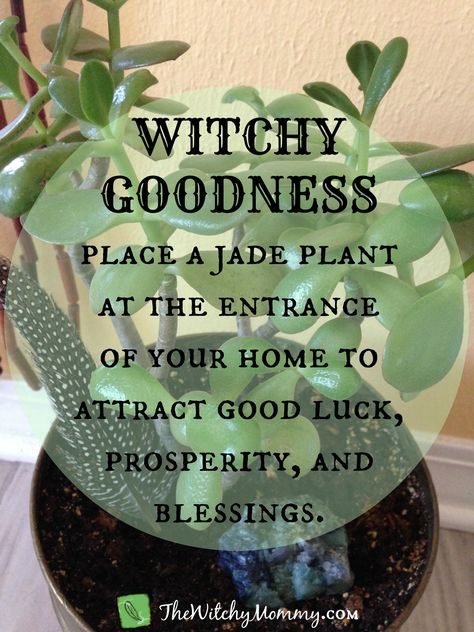 Crafting Magick Tip, Witch Tip - Use a Jade plant in your magickal practice to attract good luck, prosperity, and blessings. Green Witchcraft, Magick Spells, Ikebana, Witchy Garden, Witch Herbs, Herbal Witch, Witchcraft For Beginners, Herbal Magic, Magic Herbs