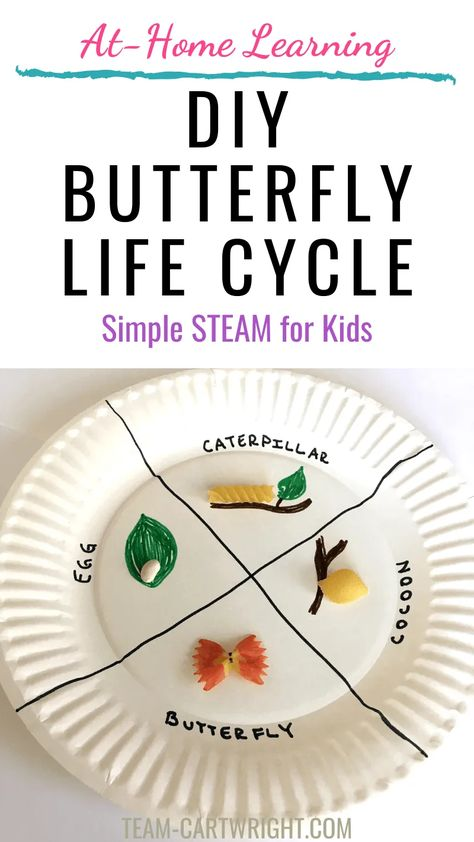 Butterfly STEAM Activities for Preschoolers and Toddlers - Team Cartwright Pre K Activities, Steam Activities, Preschool Activities At Home, Children Activities, Preschool Learning, Teaching, Learning Activities, Life Cycle Craft, Stem For Kids