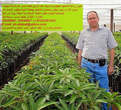 خبير زراعة المانجو المهندس شريف عبد الرازق طلعت