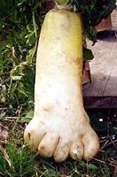 In Fortean terms, simulacra photos depict spontaneous and recognizable figures that occur by chance, often in nature. This daikon, found by farmer Hitomi Katamura in Kokura Minami-ku, Kitakyushu, Japan, is a stunning example.