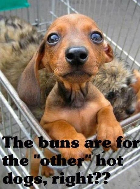 20 Funny Hot Dog Memes First Board Dog Quotes Funny Funny