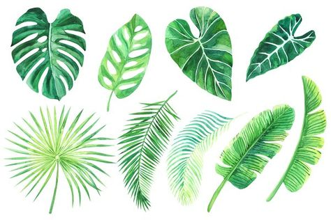 Tropical Leaves Watercolor Clip Art Tropical Leaves Watercolor