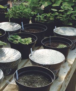 :; 10 seed starting tips from a master gardener