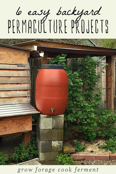 6 Easy Backyard Permaculture Projects for Beginners ...