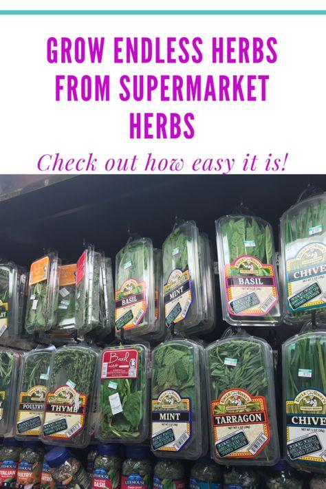 How to grow herbs from supermarket herbs - Mom's Indoor Garden