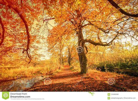 Beautiful, Golden Autumn Scenery Stock Photo