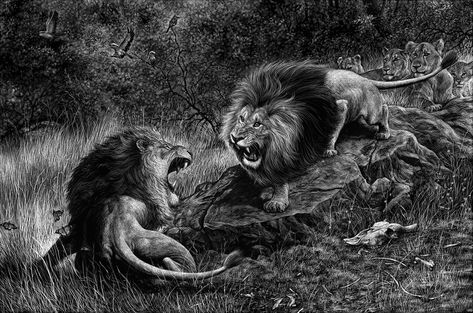 Kruger Lion By Antti Viitala Animals Birds Pets Bugs All - Captivating black and white animal portraits by antti viitala