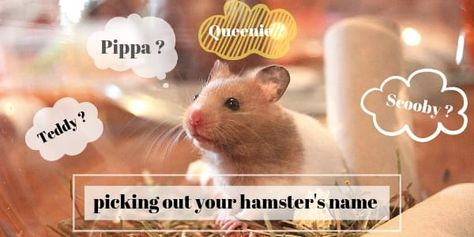 195 Perfectly Cute Hamster Names Male And Female Hamster Names