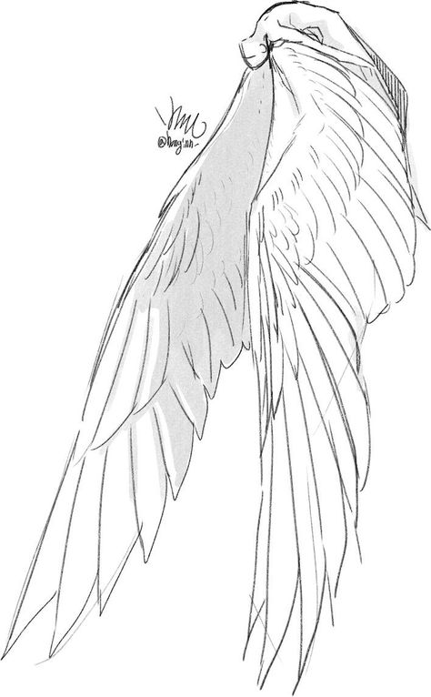 Wings Pose Angelic Sketch