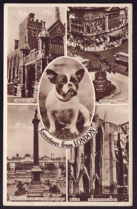 French Bulldog Dog Old Real Photo Postcard Uk French Bulldog Dog French Bulldog Funny Vintage Dog