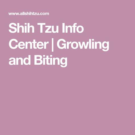 Shih Tzu Info Center Growling And Biting Shih Tzu Learning
