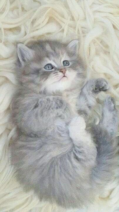 Cute Cats Munchkin How To Draw Cute Cats And Kittens Step By Step