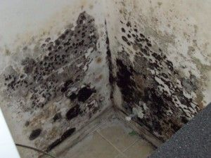 How To Remove Mold Black Mold In Basement Mold In Basement Mold Remover Clean Black Mold