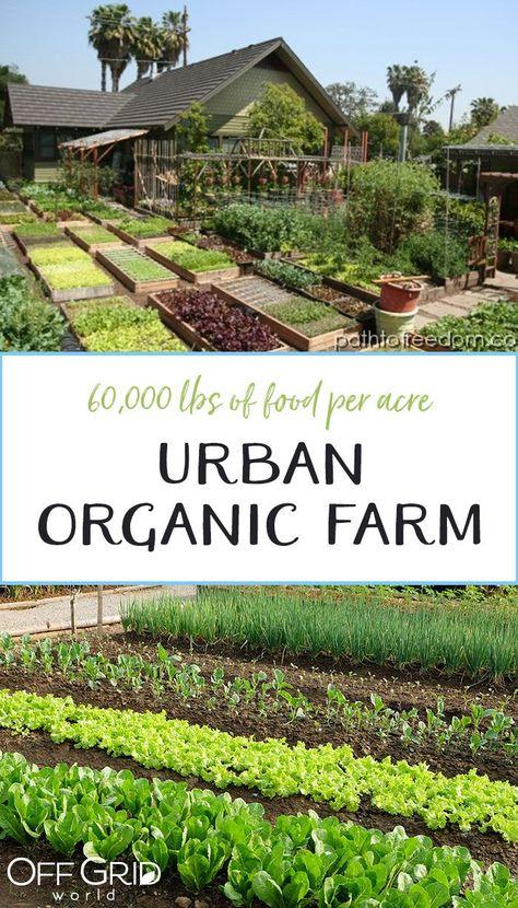 60,000lbs of Organic Food Per Acre!