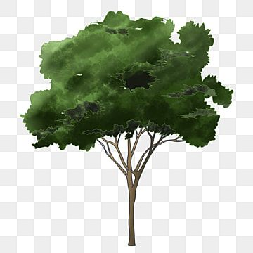 Tree Cartoon Png Tree Clipart Png Tree Elevation Tree Png Transparent Clipart Image And Psd File For Free Download Tree Clipart Cartoons Png Tree Painting
